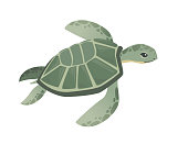 Big green sea turtle cartoon cute animal design ocean tortoise swimming in water flat vector illustration isolated on white background.