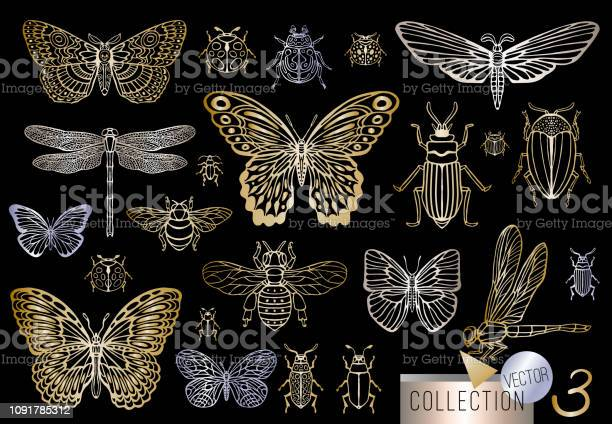 Big hand drawn golden line set of insects bugs beetles honey bees vector id1091785312?b=1&k=6&m=1091785312&s=612x612&h=mcohfqt1katp3n5tspzzuzyfs46ym bnclnxct oqk0=