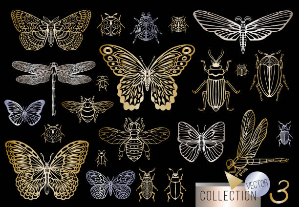 Big hand drawn golden line set of insects bugs, beetles, honey bees, butterfly, moth, bumblebee, wasp, dragonfly, grasshopper. Big hand drawn golden line set of insects bugs, beetles, honey bees, butterfly, moth, bumblebee, wasp, dragonfly, grasshopper. Silhouette vintage gold silver sketch style vector illustration beetle stock illustrations