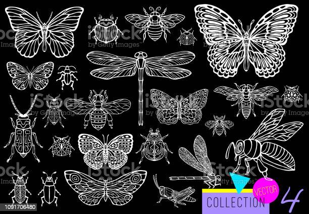 Big hand drawn line set of insects bugs beetles honey bees butterfly vector id1091706480?b=1&k=6&m=1091706480&s=612x612&h=iedo79zxrmxi4cgjmxq4nytpukw7mhoiehpkleq k3g=