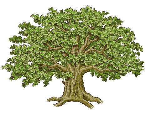 Big hand drawn tree vector illustration