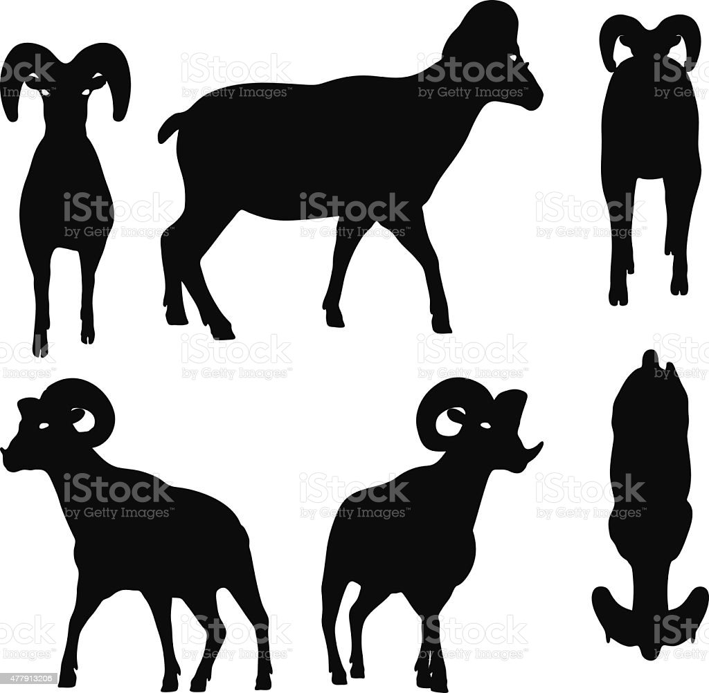 big horn sheep  silhouette in walking  pose vector art illustration