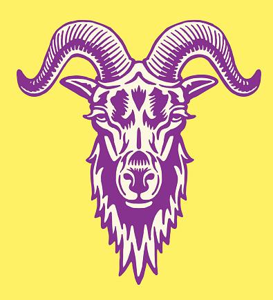 Big Horned Goat