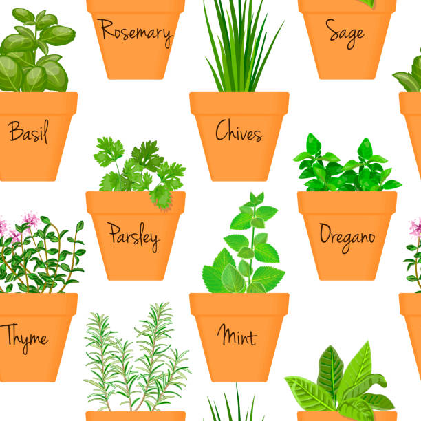 Big icon seamless pattern vector set of culinary herbs in orange terracotta clay pots with labels Big icon seamless pattern vector set of culinary herbs in orange terracotta clay pots with labels. Green growing basil, sage, rosemary, chives, thyme, parsley, mint, oregano with text. Gardening. basil stock illustrations