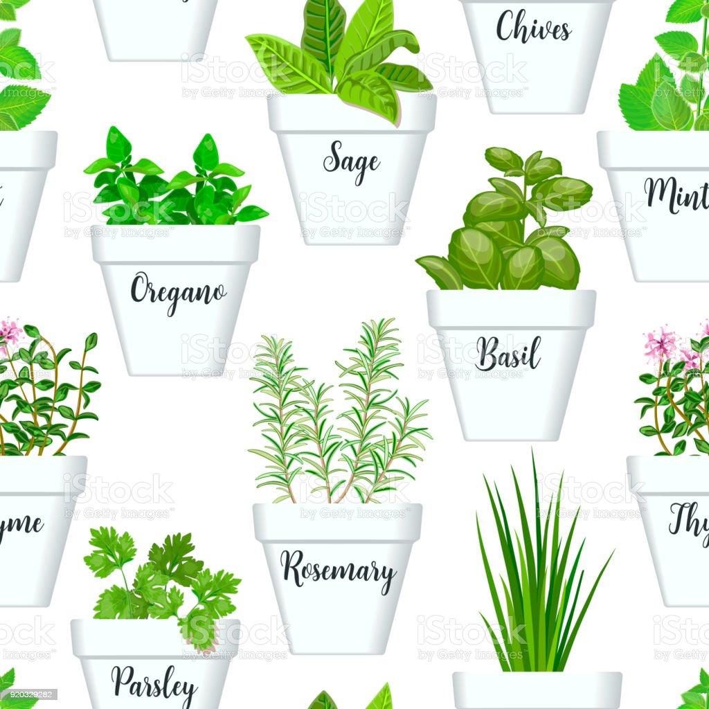 Ícone grande sem costura padrão vector conjunto de ervas aromáticas em vasos brancos com rótulos. Verde crescendo manjericão, sálvia, alecrim, cebolinha, tomilho, salsa, hortelã - ilustração de arte em vetor