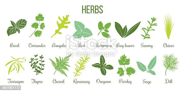 Big icon set of popular culinary herbs. Flat style. Basil, coriander, mint, rosemary, sage, basil, thyme, parsley etc. For cooking, cosmetics, store, health care, tag label, food design