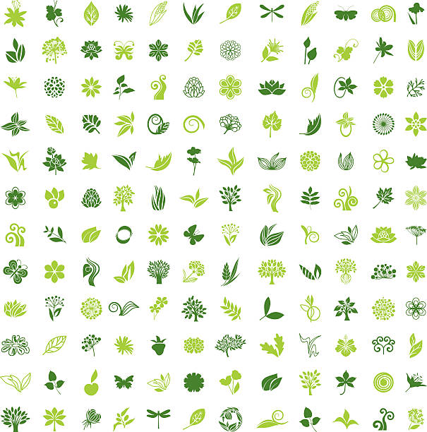 Big natural collection – Vektorgrafik
