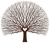 A big spreading oak tree with the branches forming a heart shape