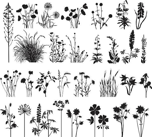 ilustrações, clipart, desenhos animados e ícones de coleção de grandes plantas - papoula planta