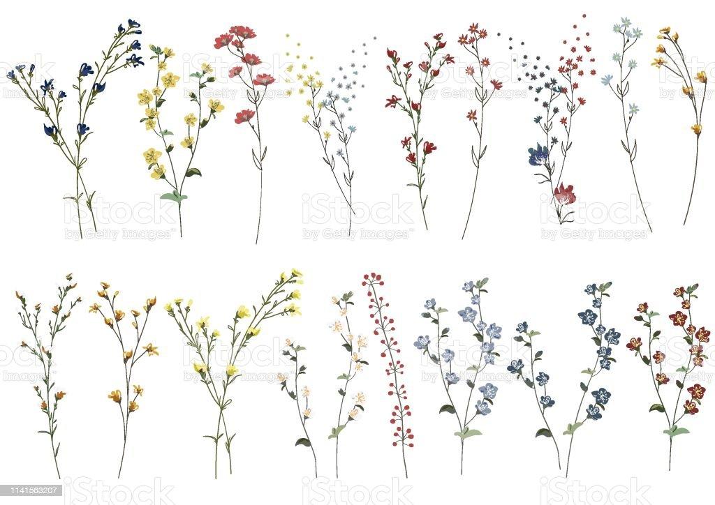 Grote set botanische bloesem bloem elementen. Takken, bladeren, kruiden, wilde planten, bloemen. Tuin, weide, veld collectie blad, loof, takken. Bloom vector illustratie geïsoleerd op witte achtergrond - Royalty-free Aquarel vectorkunst