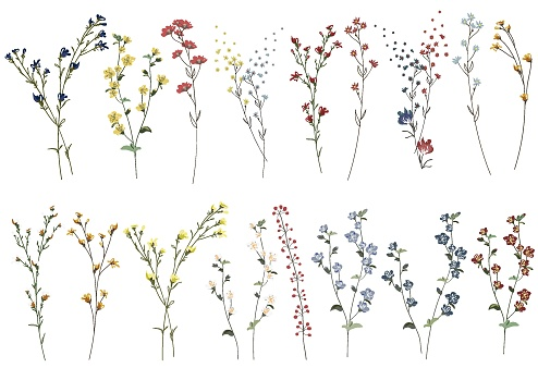 Big set botanic blossom floral elements. Branches, leaves, herbs, wild plants, flowers. Garden, meadow, feild collection leaf, foliage, branches. Bloom vector illustration isolated on white background
