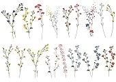 大きなセット植物の花の花の要素。枝、葉、ハーブ、野生植物、花。庭、草原、フィールドコレクションの葉、葉、枝。白い背景に孤立したブルームベクトルのイラスト
