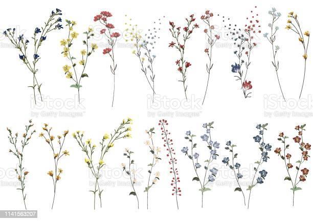 Big set botanic blossom floral elements branches leaves herbs wild vector id1141563207?b=1&k=6&m=1141563207&s=612x612&h=hk4ibqar6s6npglz43m4m1x 9ylvg4wv9takvzrkyji=