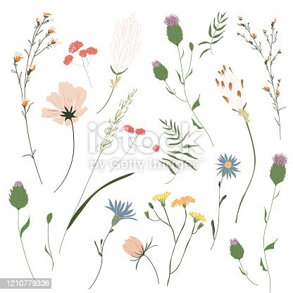 Big set botanic blossom floral elements. Garden, meadow, feild collection leaf, foliage, branches. Branches, leaves, herbs, wild plants, flowers. Bloom vector illustration isolated on white background