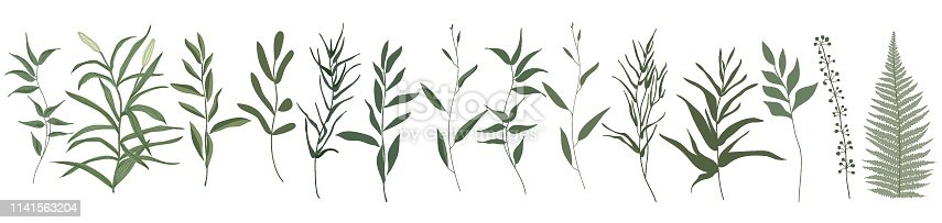Big set botanic elements. Branches with leaves, herbs, wild plants, trees. Garden and exotic, tropical collection leaf, foliage, branches. Vector illustration isolated on white background