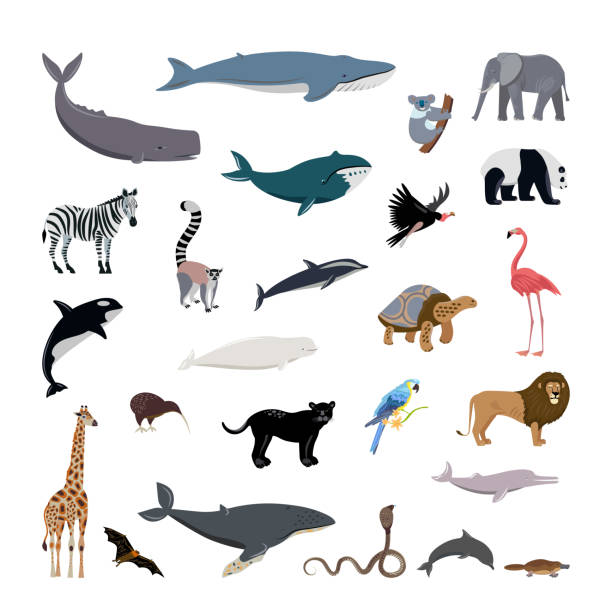 großes set cartoon-stil-ikonen der verschiedenen tiere, vögel, wale, delfine. - megabat stock-grafiken, -clipart, -cartoons und -symbole