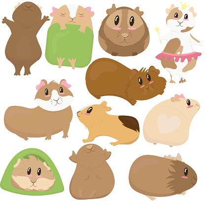 big set, cute funny guinea pigs of different colors stand, lie, sleep, cute home rodent, vector illustration