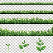 Big Set Grass And Plants