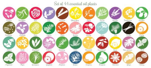 Große Reihe von 44 flache ätherisches Öl Etiketten. Weiße Silhouetten – Vektorgrafik