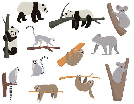Big set of animals living on trees.