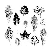 Big set of autumn, fall leaves - oak, maple, birch - hand made ink print, stamp set, solated black and white vector illustration. Hand printed set of black and white leaves, fall, autumn symbols