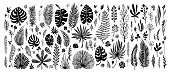 big Set of black doodle elements. exotic tropical leaves on a white background. Vector botanical illustration. Great design elements for congratulation cards, banners and others