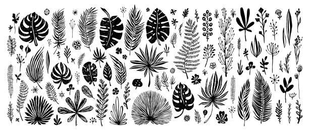 big Set of black doodle elements. big Set of black doodle elements. exotic tropical leaves on a white background. Vector botanical illustration. Great design elements for congratulation cards, banners and others fern stock illustrations