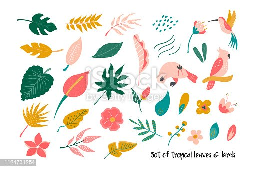 Big set of bright tropical leaves and birds. Vector illustration.