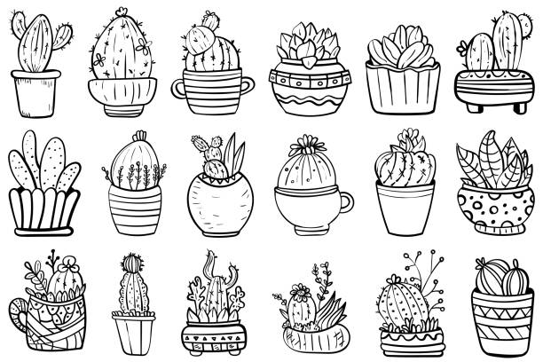 Big Set Of Cactus And Succulents. Vector collection with flowers, cacti, and succulents. - Vector. Big Houseplants. Coloring page or book. Set Of Potted Interior Flowers. Botanical illustration. Succulent plant. Scandinavian style, comfort in the house. Hygge. - Vector. Vector illustration coloring book pages templates stock illustrations