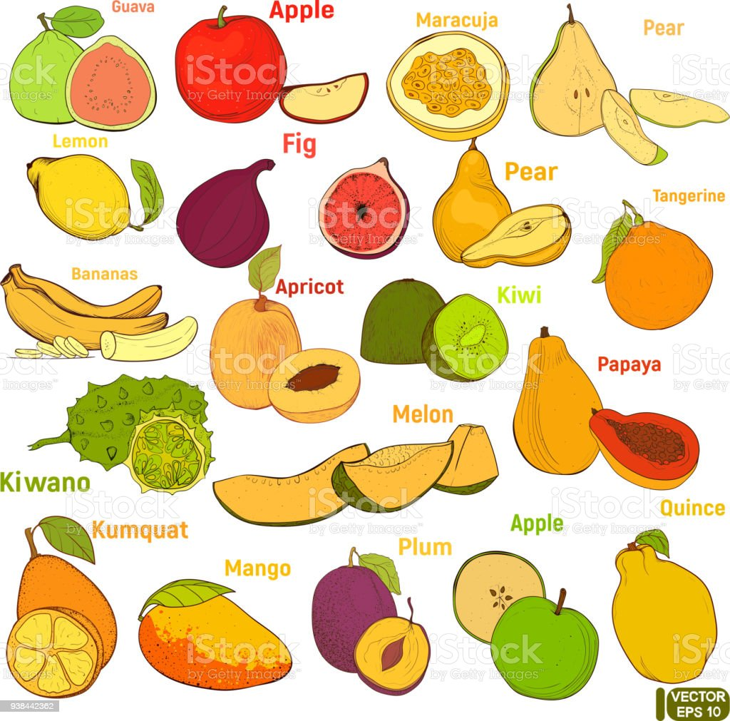 Big set of colored fruits vector art illustration