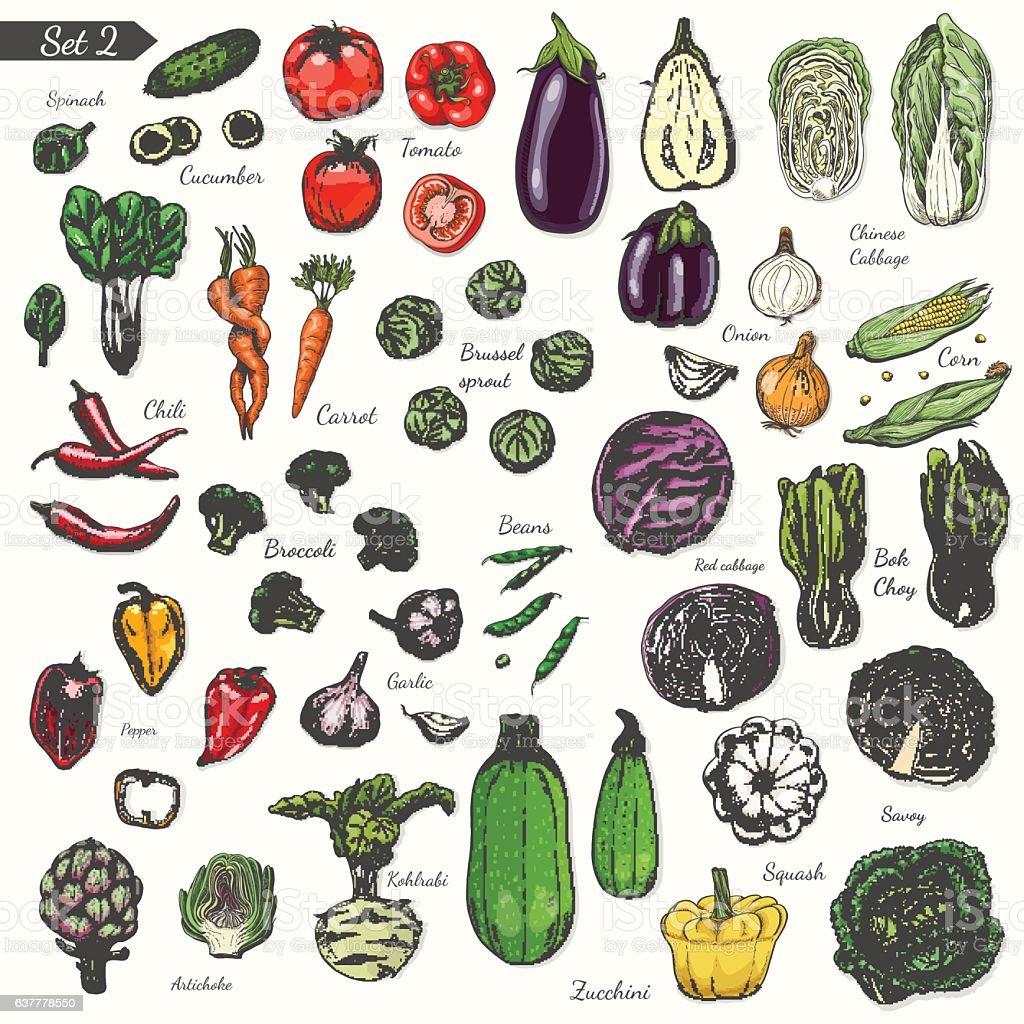 Big set of colored vegetables in sketch style vector art illustration