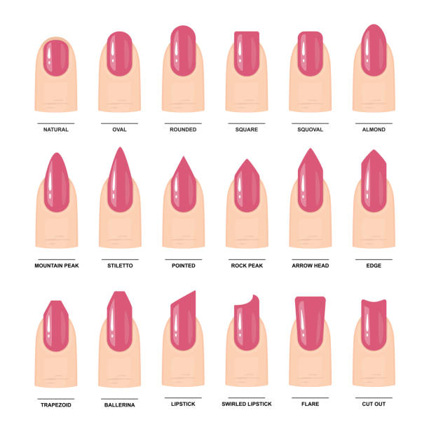 Nail Identification Chart: Royalty Free Cosmetology School Clip Art, Vector Images