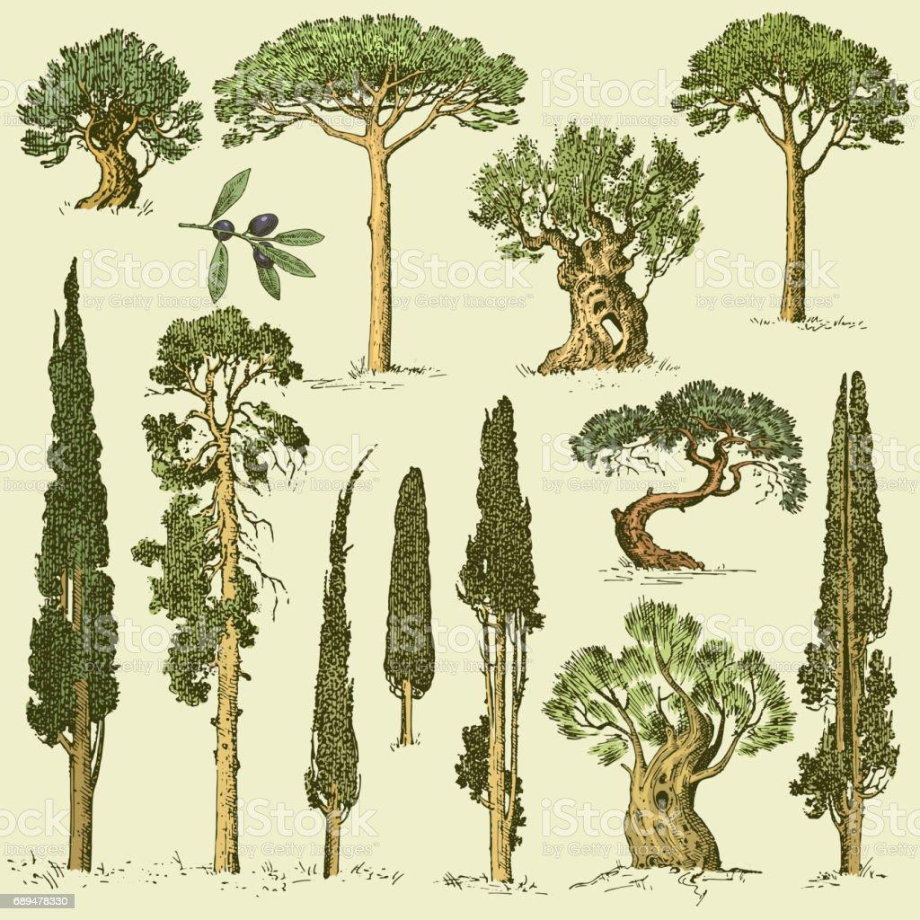 Große Reihe Von Gravierten Handgezeichnete Bäume Enthalten Pinien ...