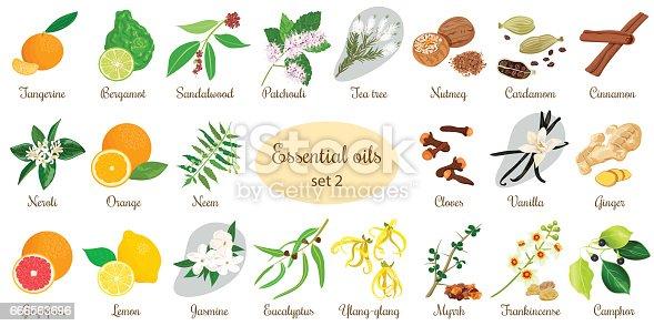 istock Big set of essential oil plants. Vanilla, cinnamon, jasmine, tea tree, bergamot, sandalwood, patchouli etc. 666563696