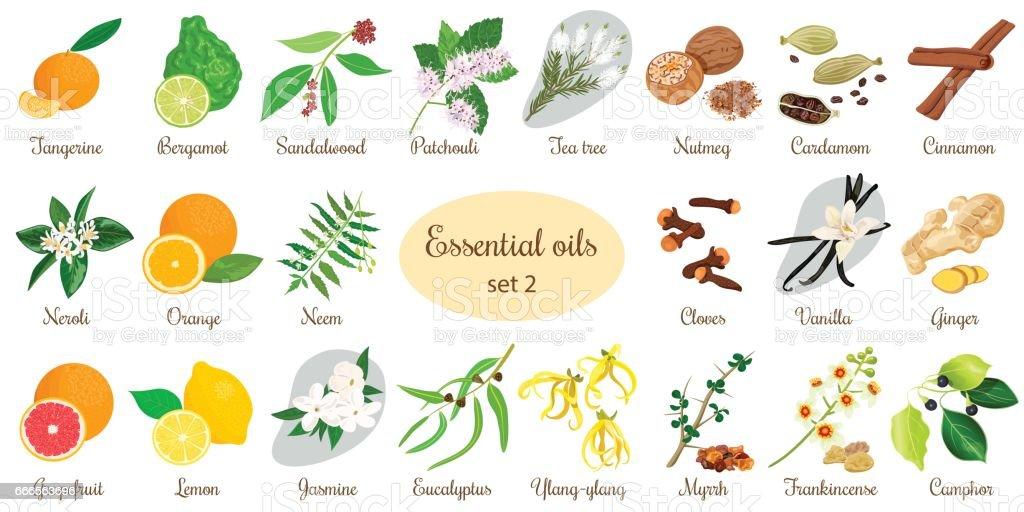 Big set of essential oil plants. Vanilla, cinnamon, jasmine, tea tree, bergamot, sandalwood, patchouli etc. vector art illustration