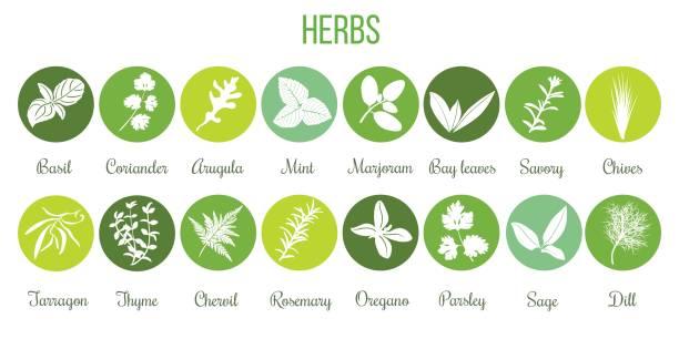 illustrazioni stock, clip art, cartoni animati e icone di tendenza di big set of flat culinary herbs in circles. white silhouettes - erboristeria