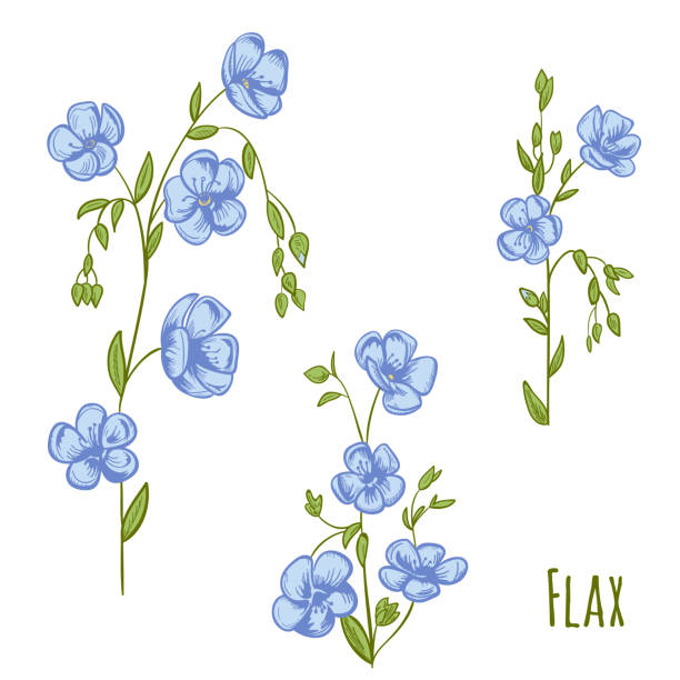 Royalty Free Blue Flax Clip Art Vector Images