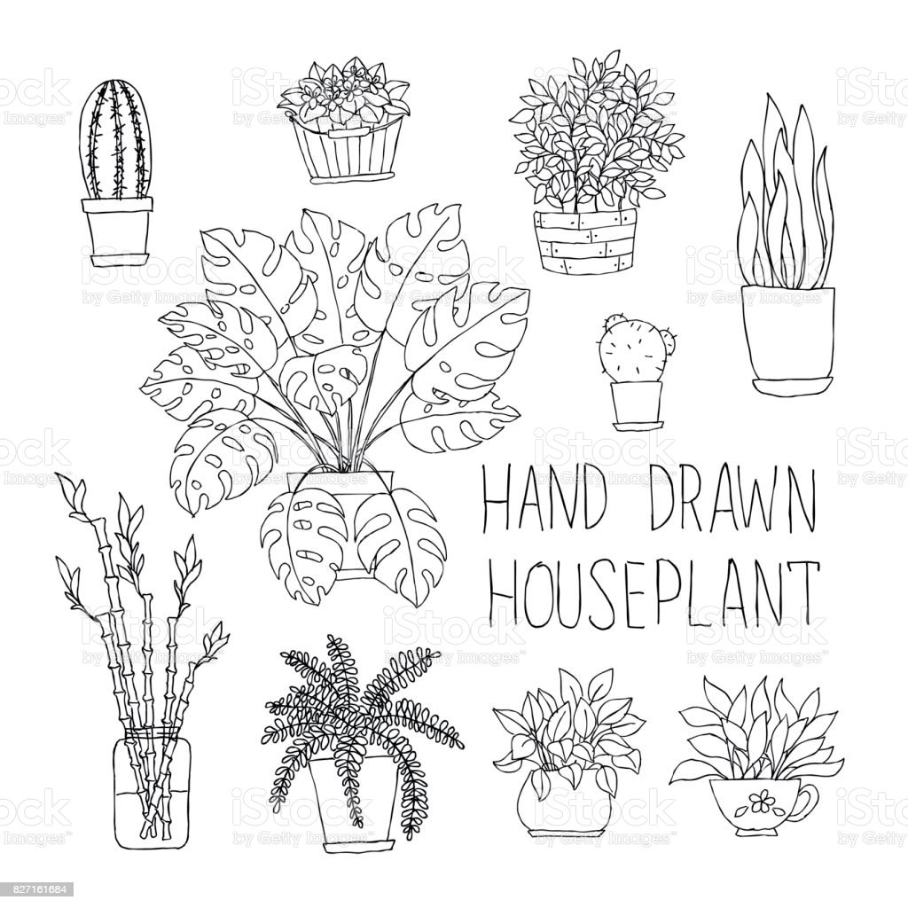 big set of hand drawn houseplants monstera, bamboo, cactus, fern and other doodle houseplants in flowerpots. royalty-free big set of hand drawn houseplants monstera bamboo cactus fern and other doodle houseplants in flowerpots stock illustration - download image now