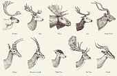Big set of Horn, antlers Animals moose or elk with impala, gazelle and greater kudu, fallow deer reindeer and stag, doe or roe deer, axis and dibatag hand drawn, engraved