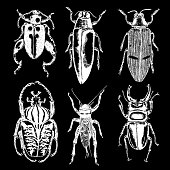 Big set of insects, bugs, beetles, fly, bees, fleas.  Many species in vintage old hand drawn stippling and hatching, shading style. Engraved stipple woodcut. Vector.