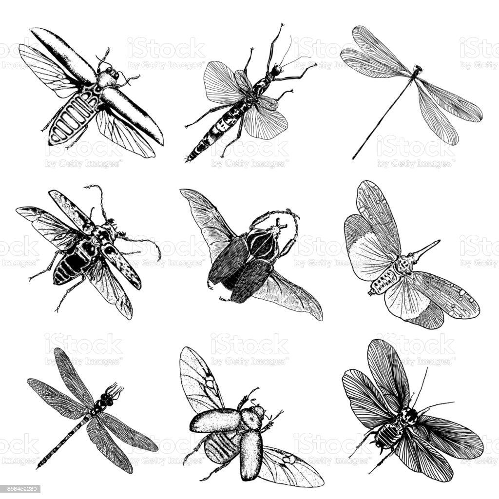 Ilustración de Conjunto Grande De Insectos Bugs Escarabajos Moscas ...