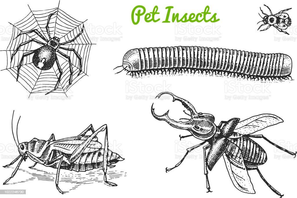 Grosse Sammlung Von Insekten Fehler Kafer Tattoo Spider Wurm