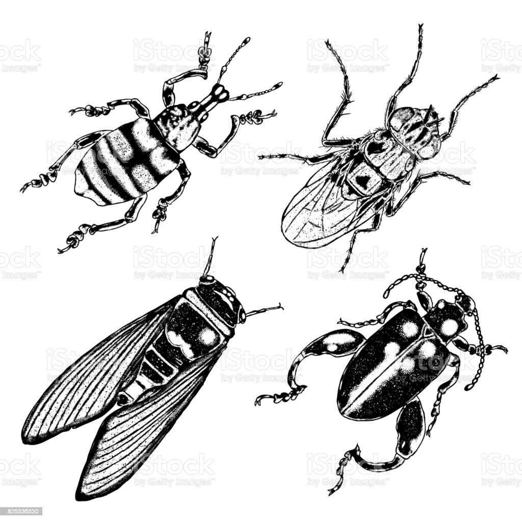 [Superstición] Terrores de Hekshold Big-set-of-insects-bugs-flying-beetles-many-species-in-vintage-old-vector-id825336330