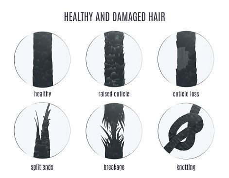 Damaged & Healthy Hair Strands   TopTenHairCare for Better Hair Health