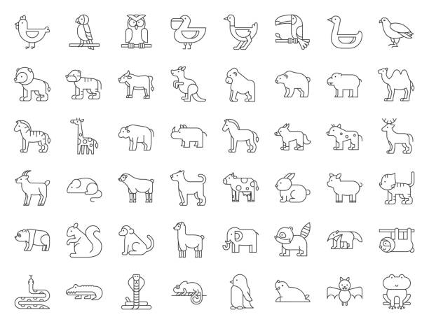 big set of safari, arctic, forest, zoo animal and bird such as tiger, seal, camel, sloth, kangaroo, frog, pelican, parrot, toucan icon, thin line - amphibians stock illustrations