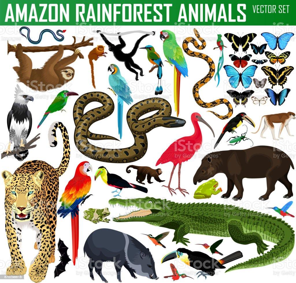 big set of vector amazon rainforest jungle animals vector art illustration