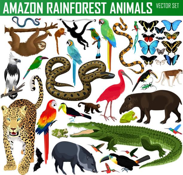 big set of vector amazon rainforest jungle animals - jaguar stock illustrations