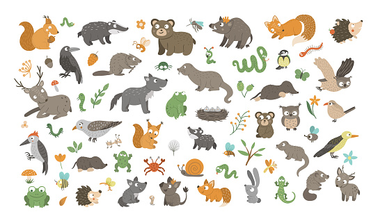 Big set of vector hand drawn flat woodland animals, their babies, birds, insects and forest clipart. Funny animalistic collection. Cute illustration with bear, fox, squirrel, deer, hedgehog.