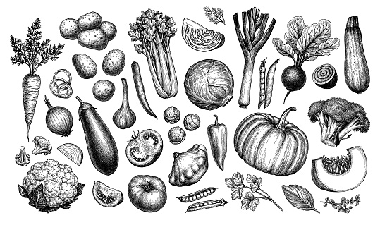 Big set of vegetables. Ink sketch collection isolated on white background. Hand drawn vector illustration. Retro style.