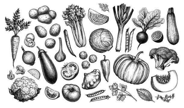Big set of vegetables. Big set of vegetables. Ink sketch collection isolated on white background. Hand drawn vector illustration. Retro style. tomato stock illustrations
